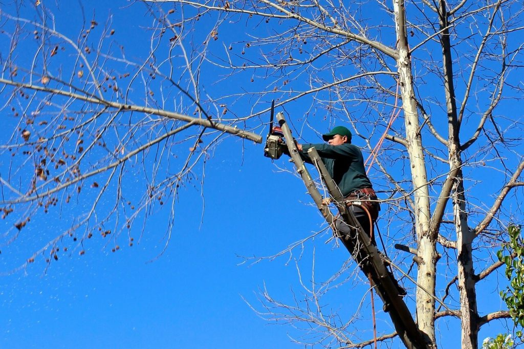 Contact Us-Dover FL Tree Trimming and Stump Grinding Services-We Offer Tree Trimming Services, Tree Removal, Tree Pruning, Tree Cutting, Residential and Commercial Tree Trimming Services, Storm Damage, Emergency Tree Removal, Land Clearing, Tree Companies, Tree Care Service, Stump Grinding, and we're the Best Tree Trimming Company Near You Guaranteed!