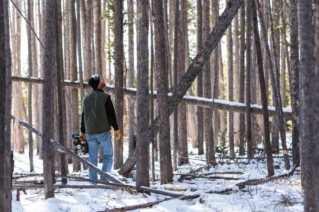 Dover FL Tree Trimming and Stump Grinding Services Home Page Image-We Offer Tree Trimming Services, Tree Removal, Tree Pruning, Tree Cutting, Residential and Commercial Tree Trimming Services, Storm Damage, Emergency Tree Removal, Land Clearing, Tree Companies, Tree Care Service, Stump Grinding, and we're the Best Tree Trimming Company Near You Guaranteed!