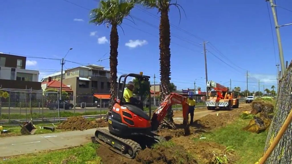 Palm Tree Removal-Dover FL Tree Trimming and Stump Grinding Services-We Offer Tree Trimming Services, Tree Removal, Tree Pruning, Tree Cutting, Residential and Commercial Tree Trimming Services, Storm Damage, Emergency Tree Removal, Land Clearing, Tree Companies, Tree Care Service, Stump Grinding, and we're the Best Tree Trimming Company Near You Guaranteed!