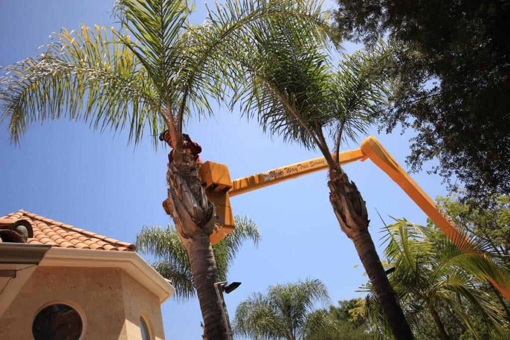 Palm Tree Trimming-Dover FL Tree Trimming and Stump Grinding Services-We Offer Tree Trimming Services, Tree Removal, Tree Pruning, Tree Cutting, Residential and Commercial Tree Trimming Services, Storm Damage, Emergency Tree Removal, Land Clearing, Tree Companies, Tree Care Service, Stump Grinding, and we're the Best Tree Trimming Company Near You Guaranteed!