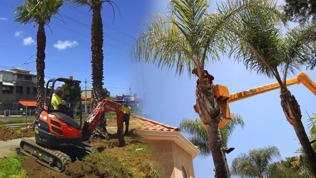 Palm tree trimming & palm tree removal-Dover FL Tree Trimming and Stump Grinding Services-We Offer Tree Trimming Services, Tree Removal, Tree Pruning, Tree Cutting, Residential and Commercial Tree Trimming Services, Storm Damage, Emergency Tree Removal, Land Clearing, Tree Companies, Tree Care Service, Stump Grinding, and we're the Best Tree Trimming Company Near You Guaranteed!