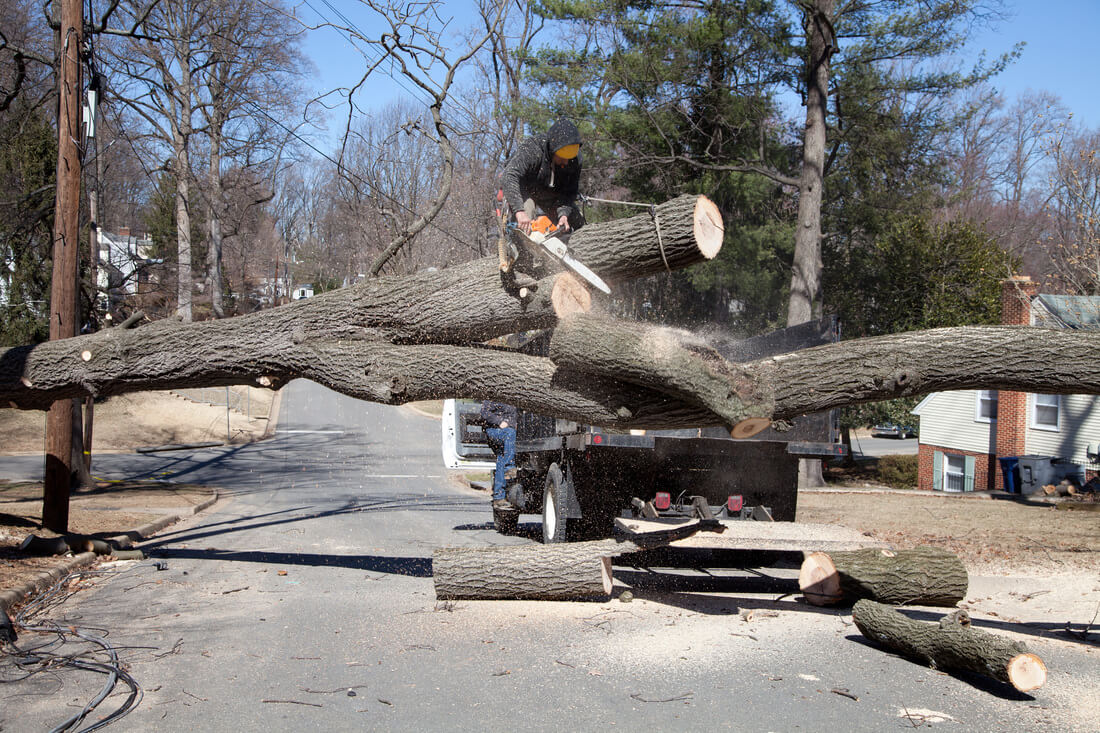 Residential Tree Services-Dover FL Tree Trimming and Stump Grinding Services-We Offer Tree Trimming Services, Tree Removal, Tree Pruning, Tree Cutting, Residential and Commercial Tree Trimming Services, Storm Damage, Emergency Tree Removal, Land Clearing, Tree Companies, Tree Care Service, Stump Grinding, and we're the Best Tree Trimming Company Near You Guaranteed!