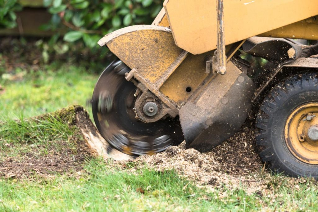 Stump Grinding-Dover FL Tree Trimming and Stump Grinding Services-We Offer Tree Trimming Services, Tree Removal, Tree Pruning, Tree Cutting, Residential and Commercial Tree Trimming Services, Storm Damage, Emergency Tree Removal, Land Clearing, Tree Companies, Tree Care Service, Stump Grinding, and we're the Best Tree Trimming Company Near You Guaranteed!
