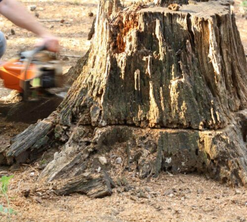 Stump Removal-Dover FL Tree Trimming and Stump Grinding Services-We Offer Tree Trimming Services, Tree Removal, Tree Pruning, Tree Cutting, Residential and Commercial Tree Trimming Services, Storm Damage, Emergency Tree Removal, Land Clearing, Tree Companies, Tree Care Service, Stump Grinding, and we're the Best Tree Trimming Company Near You Guaranteed!