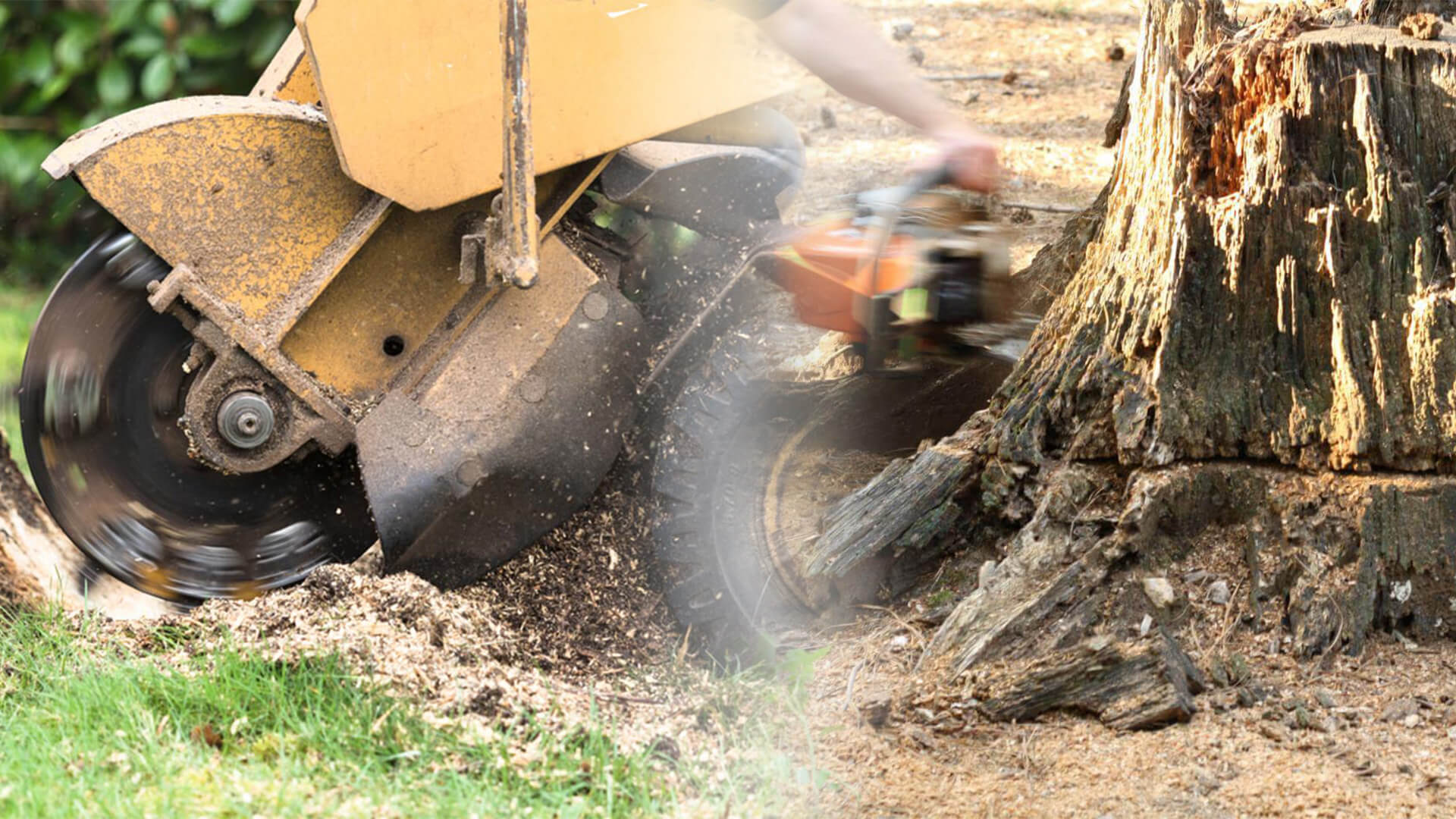 Stump grinding & removal-Dover FL Tree Trimming and Stump Grinding Services-We Offer Tree Trimming Services, Tree Removal, Tree Pruning, Tree Cutting, Residential and Commercial Tree Trimming Services, Storm Damage, Emergency Tree Removal, Land Clearing, Tree Companies, Tree Care Service, Stump Grinding, and we're the Best Tree Trimming Company Near You Guaranteed!