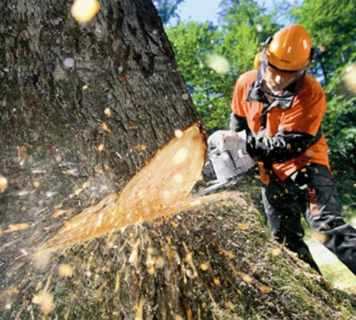Tree Cutting-Dover FL Tree Trimming and Stump Grinding Services-We Offer Tree Trimming Services, Tree Removal, Tree Pruning, Tree Cutting, Residential and Commercial Tree Trimming Services, Storm Damage, Emergency Tree Removal, Land Clearing, Tree Companies, Tree Care Service, Stump Grinding, and we're the Best Tree Trimming Company Near You Guaranteed!