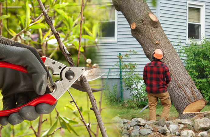 Tree pruning & tree removal-Dover FL Tree Trimming and Stump Grinding Services-We Offer Tree Trimming Services, Tree Removal, Tree Pruning, Tree Cutting, Residential and Commercial Tree Trimming Services, Storm Damage, Emergency Tree Removal, Land Clearing, Tree Companies, Tree Care Service, Stump Grinding, and we're the Best Tree Trimming Company Near You Guaranteed!